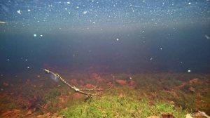 Suomalainen koralliriutta eli suo kevättulvassa. Tero Hintsa.