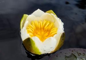 Lumpeen kukka Tero Hintsa