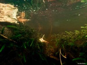 Silmäkoski rapids underwater Tero Hintsa