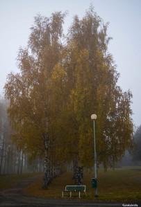 Ruskaa Seinäjoen keskustassa Tero Hintsa