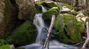 Karhunahas putous Petäjävesi Multia 1.6.2016 Tero Hintsa