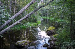 Leivonmäen kansallispuisto Joutsniemi Kuvakulmilla Tero Hintsa