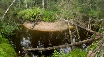 Joen ylle on kaatunut puita itsestään ja majavien jyrsiminä.