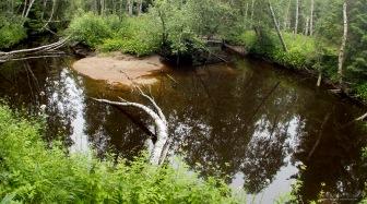 Koivukin on kaartunut joen mutkittelun myötä.