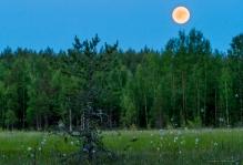 9.7.2017 täysikuu puolenyön aikaan suomaisemassa.